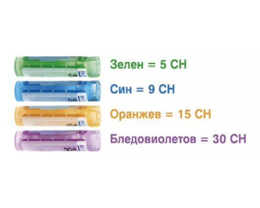 APIS MELLIFICA 15 CH